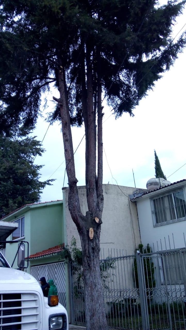 Poda de árboles (4)